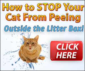 Cat Spraying What You Can Do