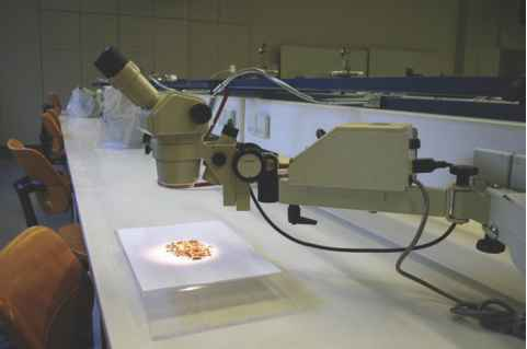 Stereoscopic Microscope Exam