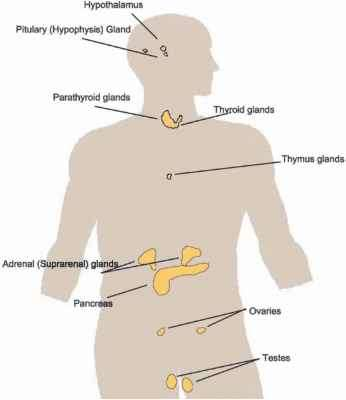 Male Glands