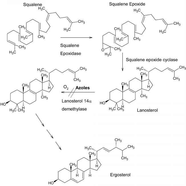 Pharmaceutical Chemistry Mechanism