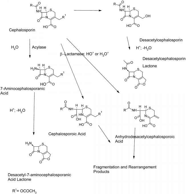 Degradation Cephalosporin