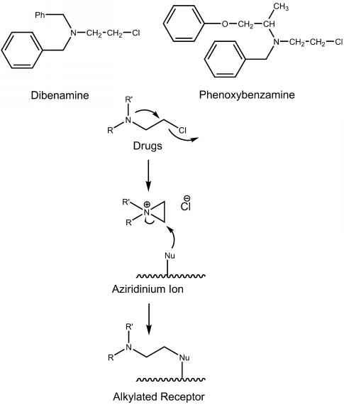 Phenoxybenzamine Mechanism Action