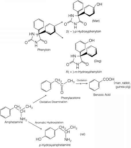 Chemical Kinetics Drug Metabolism