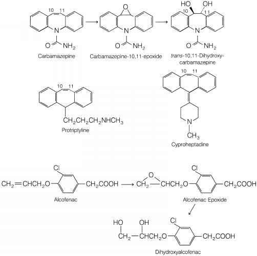 Metabolism process human body
