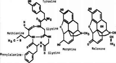 Morphine Structure